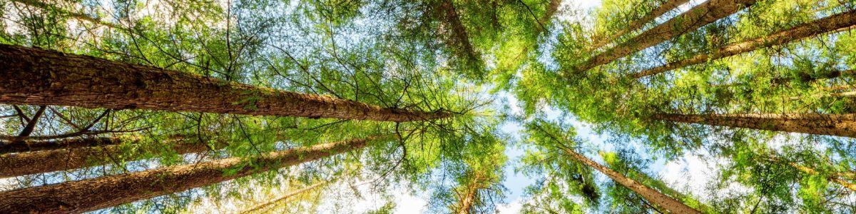 Co wiesz o lesie?