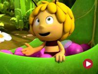 Pszczółka Maja, Wszystko czyste