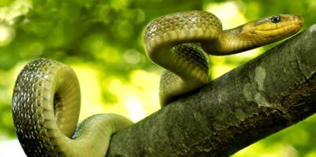 10 faktów o wężach