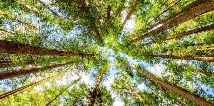 """""""Wielki Test o Lesie"""" – rozgrzewka 1"""