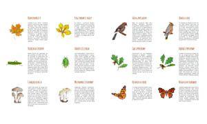realistyczne-ilustracje-i-krotkie-opisy-ucza-dzieci-bacznie-patrzec-rozpoznawac-ojczyste-gatunki-roslin-i-zwierzat