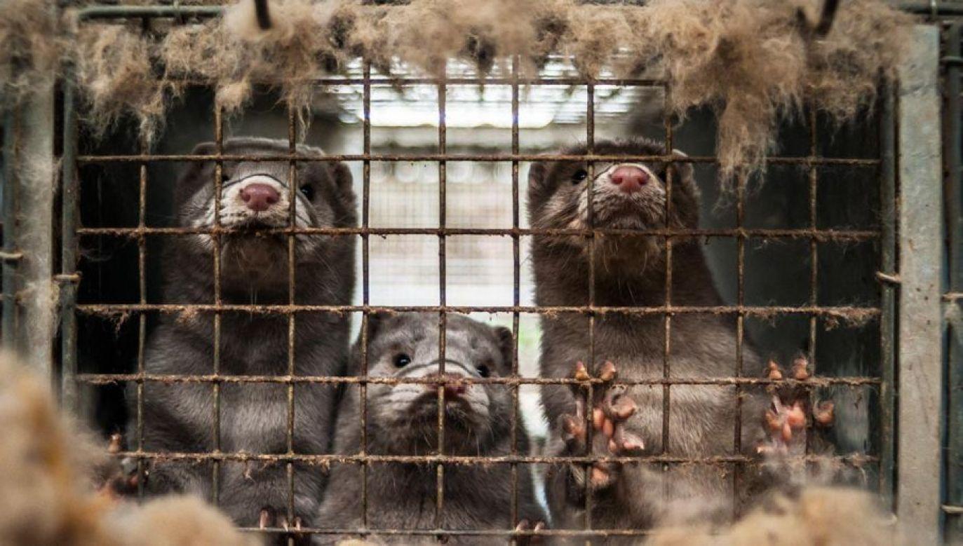 HSI to międzynarodowa organizacja zajmująca się ochroną zwierząt i walką o ich bardziej humanitarne traktowanie (fot. Shutterstock/Nicolai Dybdal)