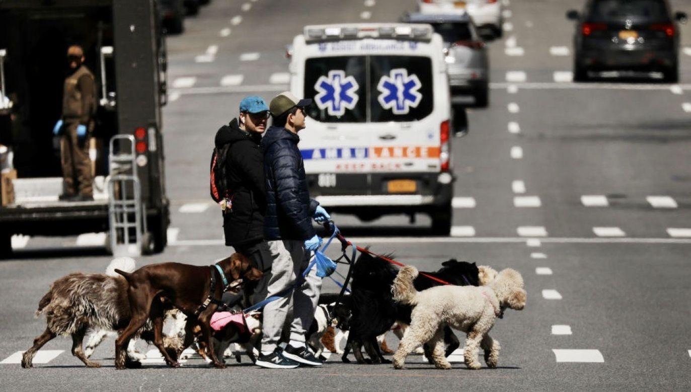 Mieszkańcy Nowego Jorku zatęsknili za czworonogami podczas kwarantanny wywołanej epidemią koronawirusa(fot. Spencer Platt/Getty Images)