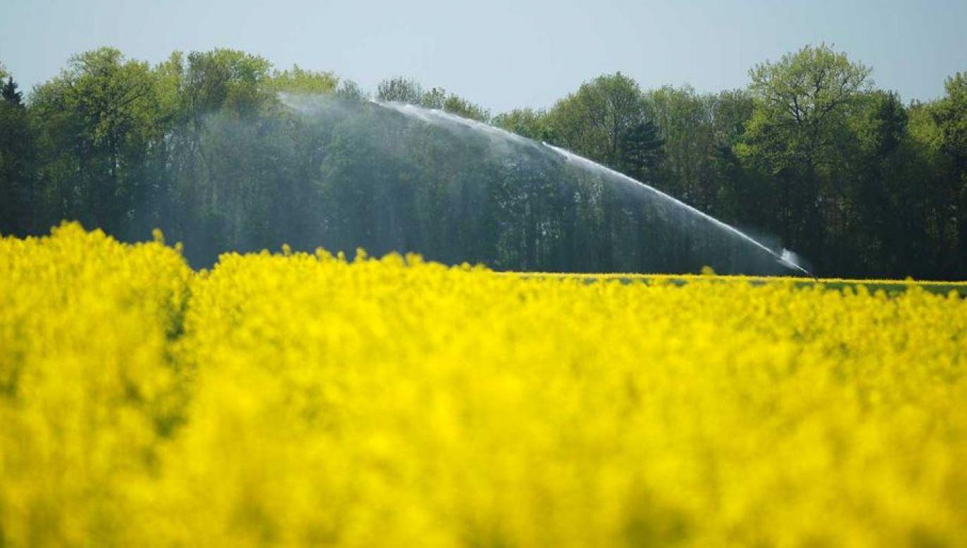 Szef resortu rolnictwa o izraelskich wzorcach dotyczących nawadniania (fot. REUTERS/Denis Balibouse)
