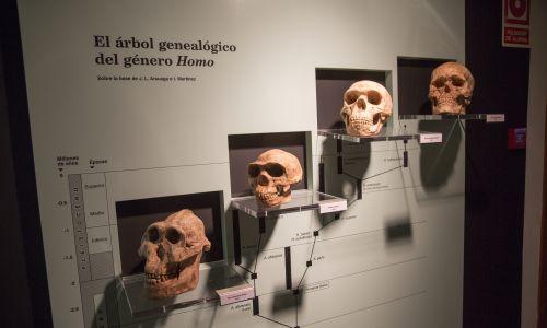 Ewolucja Homo Sapiens – Muzeum Archeologiczne w Jerez de la Frontera, w prowincji Kadyks, Hiszpania. Fot.: Geography Photos / Universal Images Group via Getty Images