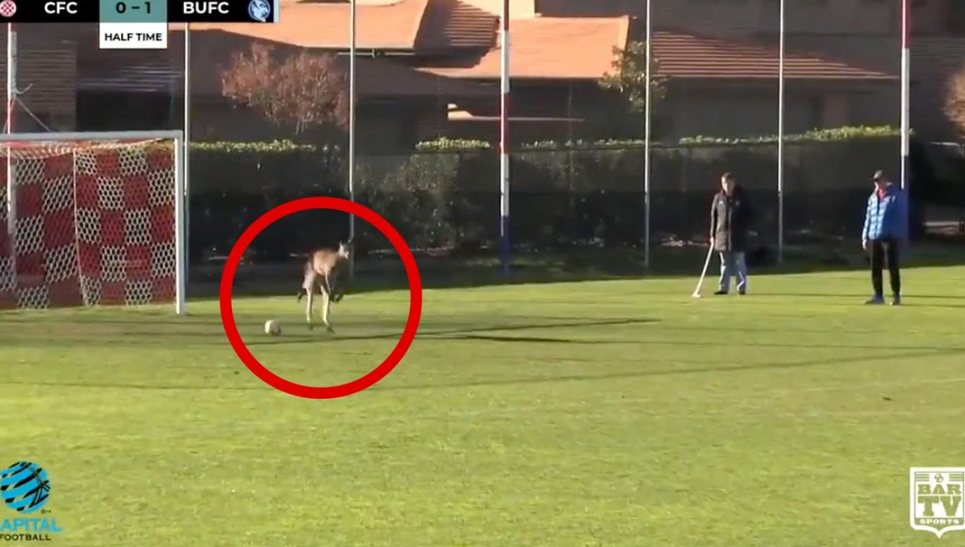 Kangur miał kilka udanych interwencji (fot. Bar TV sports)