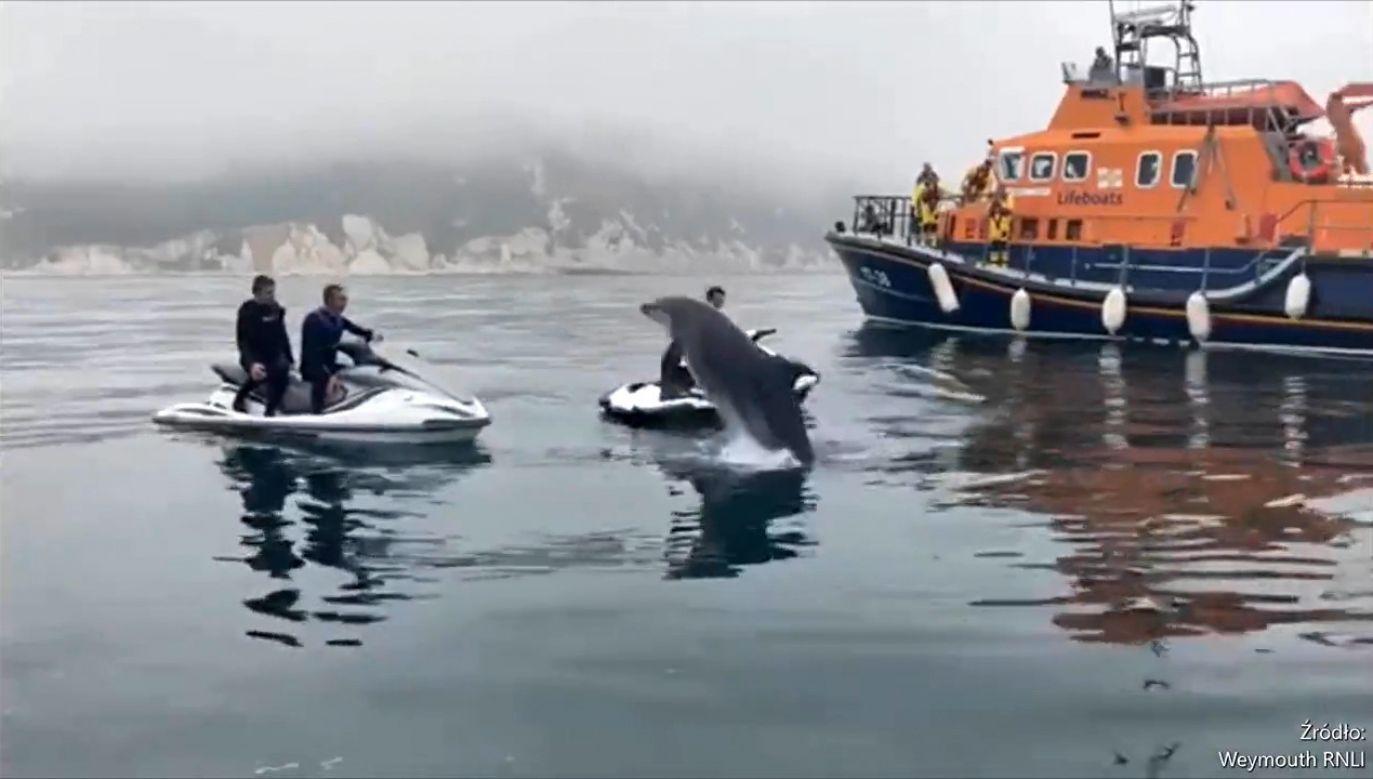 Delfiny pływały wokół łodzi ratunkowych (fot. EBU/Weymouth RNLI)