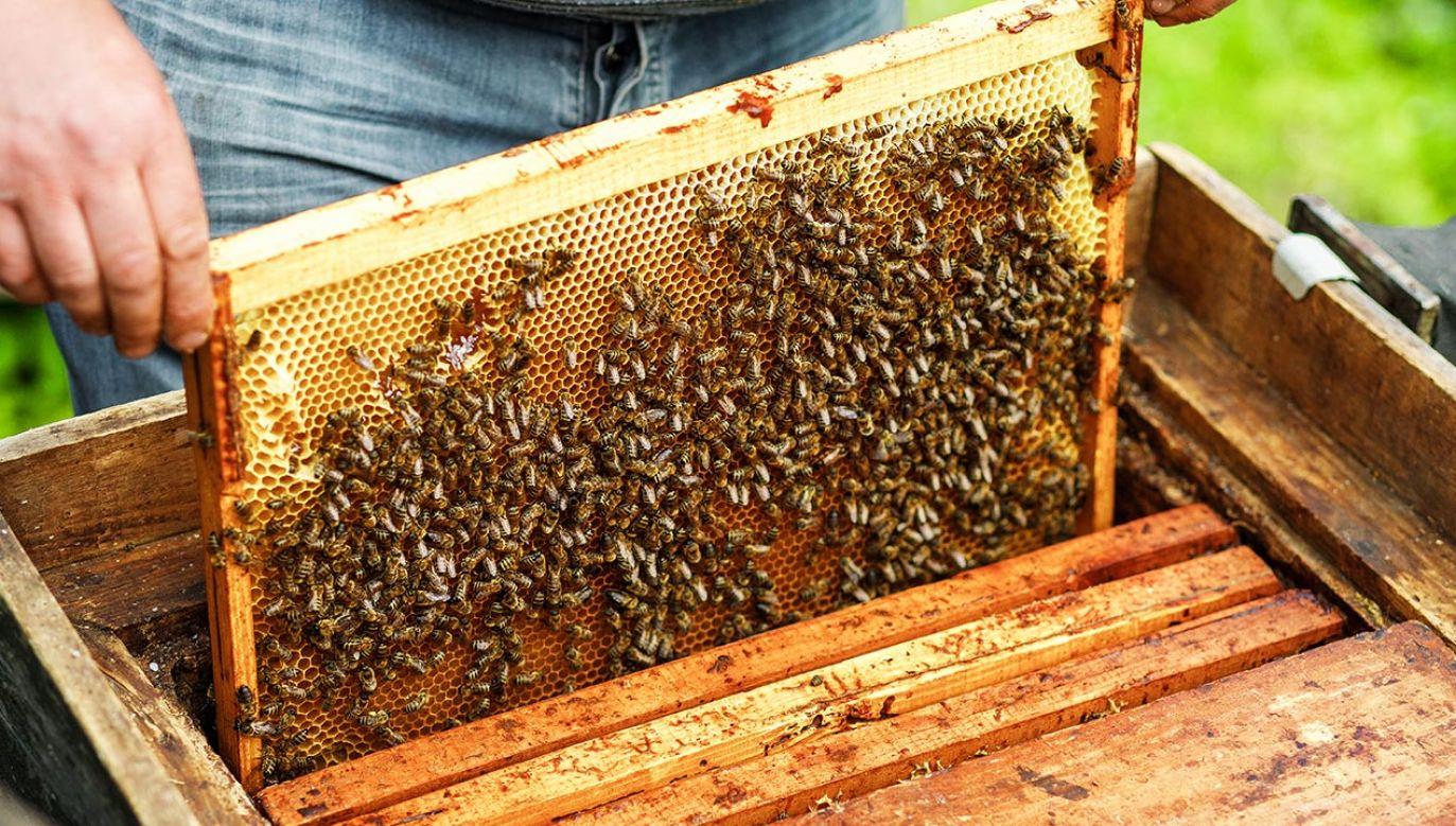 Właściciele zajmują się pszczelarstwem od 20 lat (fot. Shuttertstock/JuliLeo)