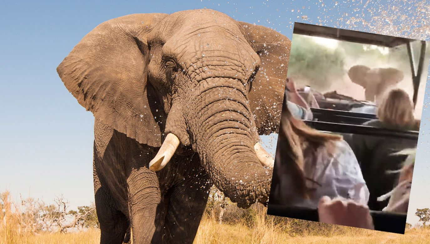 Nie wiadomo, co zdenerwowało słonia (fot. Shutterstock/ Donovan van Staden/FB/Kruger captured by Shaun)