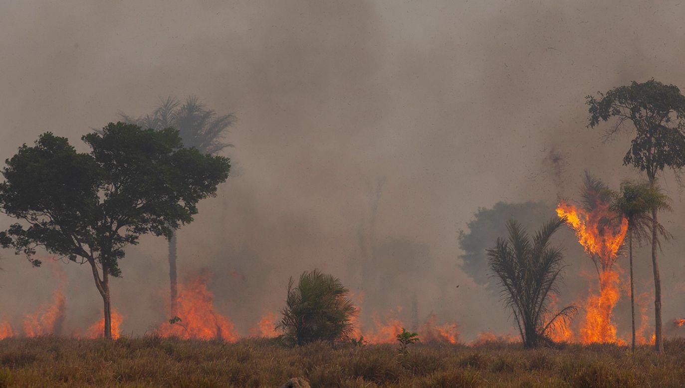 Od początku roku spłonęło 11 088 ha lasów, największy obszar od 12 lat (fot. Ernesto Carriço/NurPhoto via Getty Images)