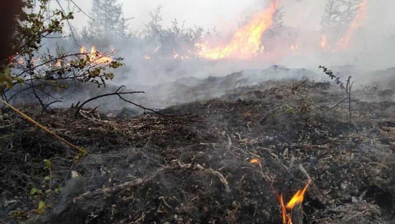 Tylko w Kraju Krasnojarskim zlokalizowano ponad 70 pożarów (fot. PAP/EPA/EMERCOM OF RUSSIA PRESS SERVICE / HANDOUT)