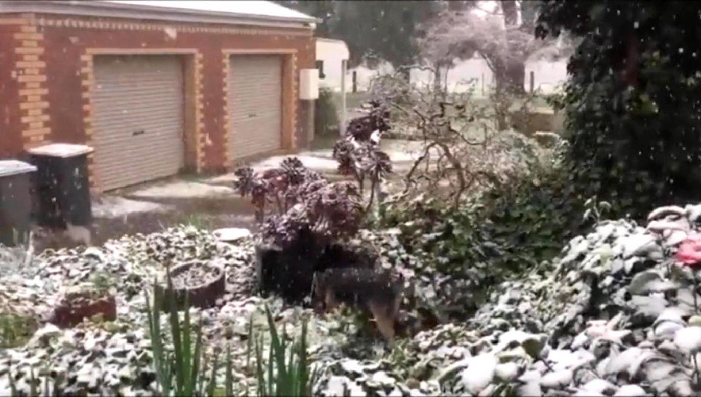Śnieg pokrył w czwartek największe śródlądowe miasto w australijskim stanie Wiktoria – Ballarat (fot. EBU/Darren Card)