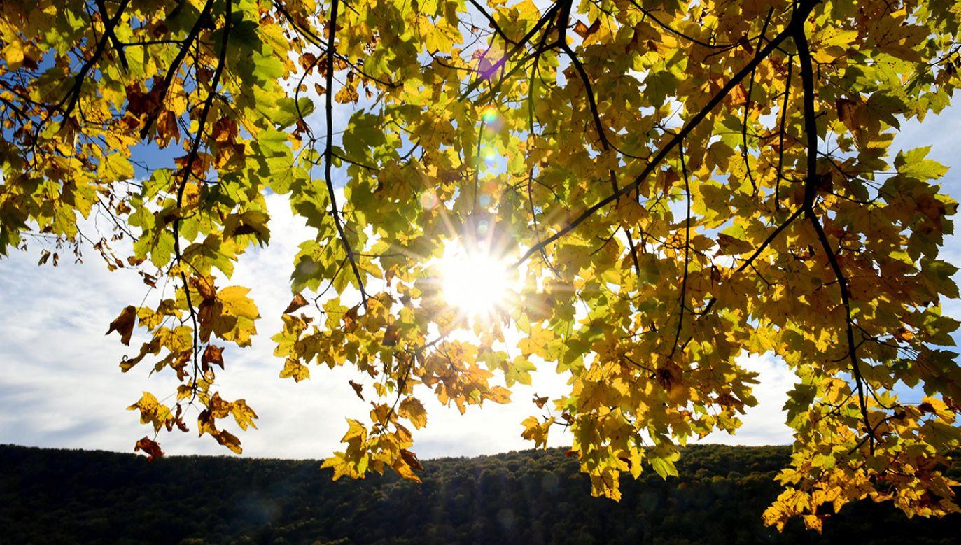 Zapowiada się ciepła połowa października (fot. PAP/Darek Delmanowicz)