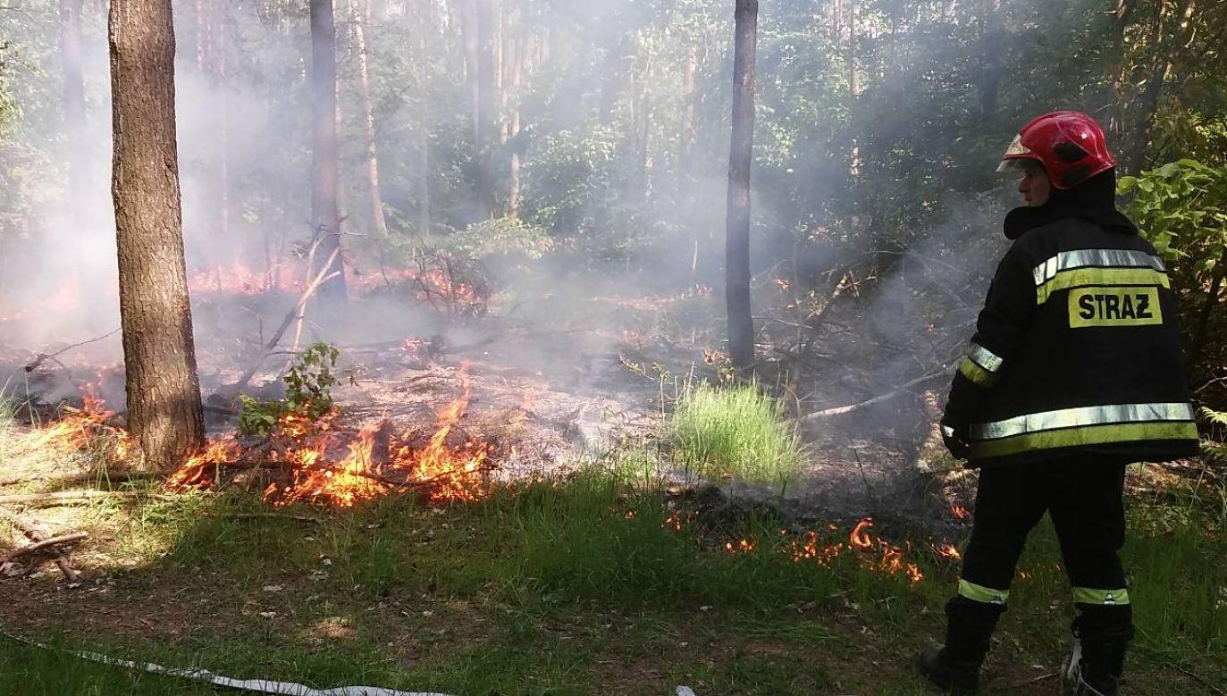 Wkrótce możliwy zakaz wstępu do lasów (fot. Lasy Państwowe)