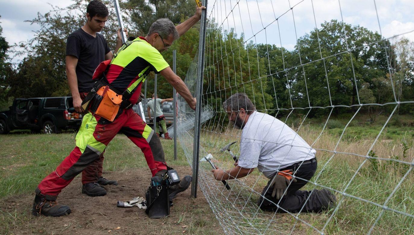 Ma chronić przed ASF (fot. arch.PAP/EPA/HAYOUNG JEON)