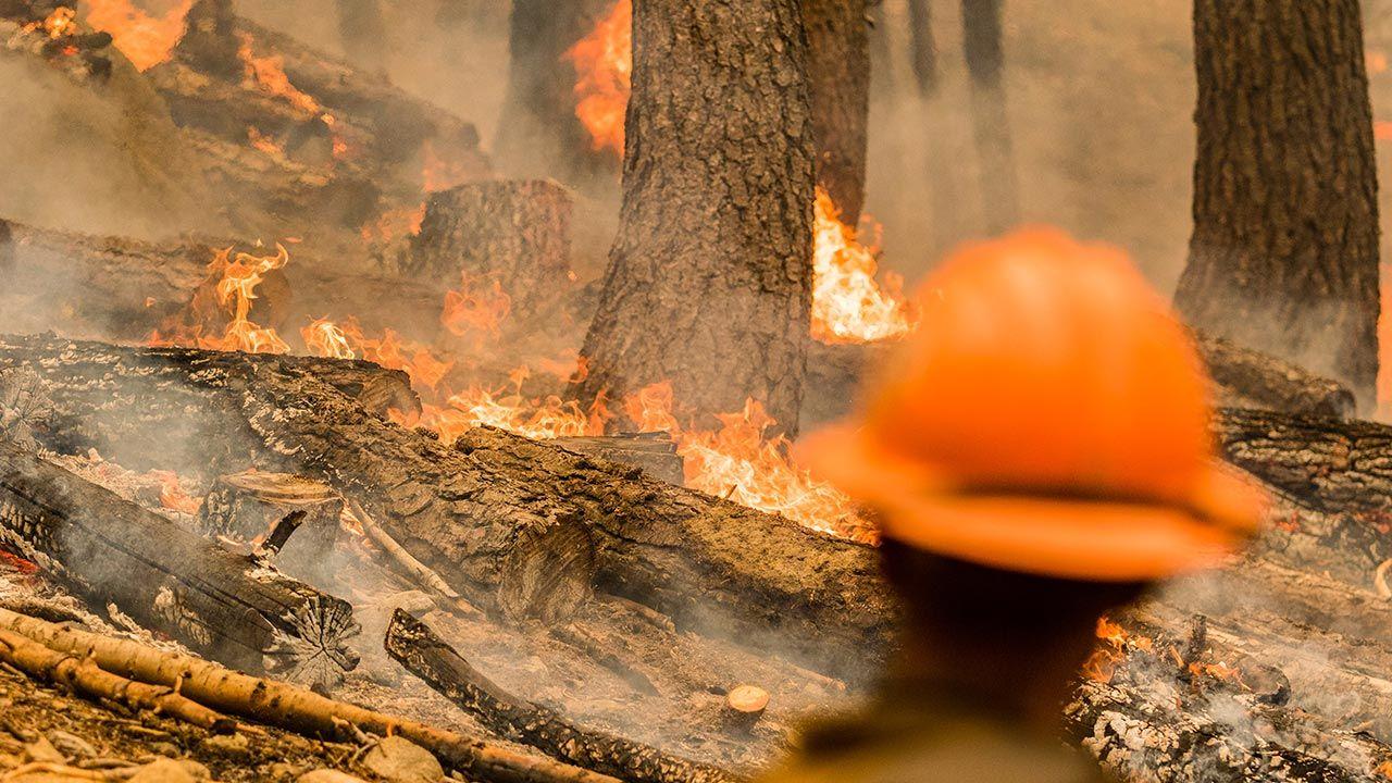 W akcji udział bierze ponad 350 strażaków (fot. Forum/Zuma PressTy O'Neil, zdjęcie ilustracyjne)