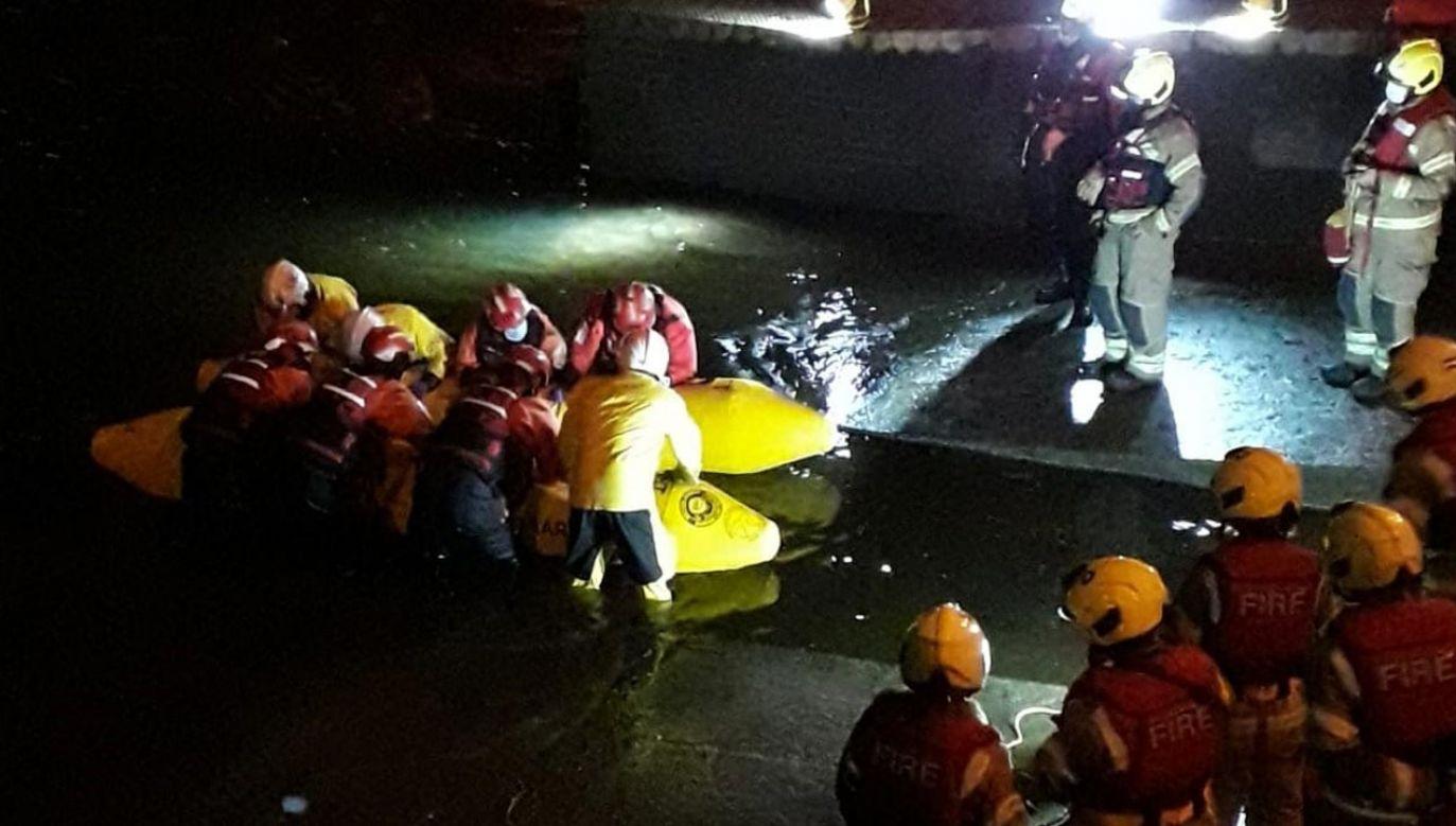 Ratownicy uwolnili małego wieloryba, który utknął w Tamizie (fot. Twitter/London Fire Brigade)