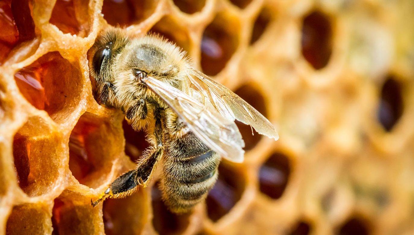 Więcej gatunków pszczół występuje na półkuli północnej (fot. Shutterstock/Shaiith)