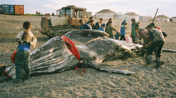 """""""Wieloryb z Lorino"""" − starcie dwóch światów"""