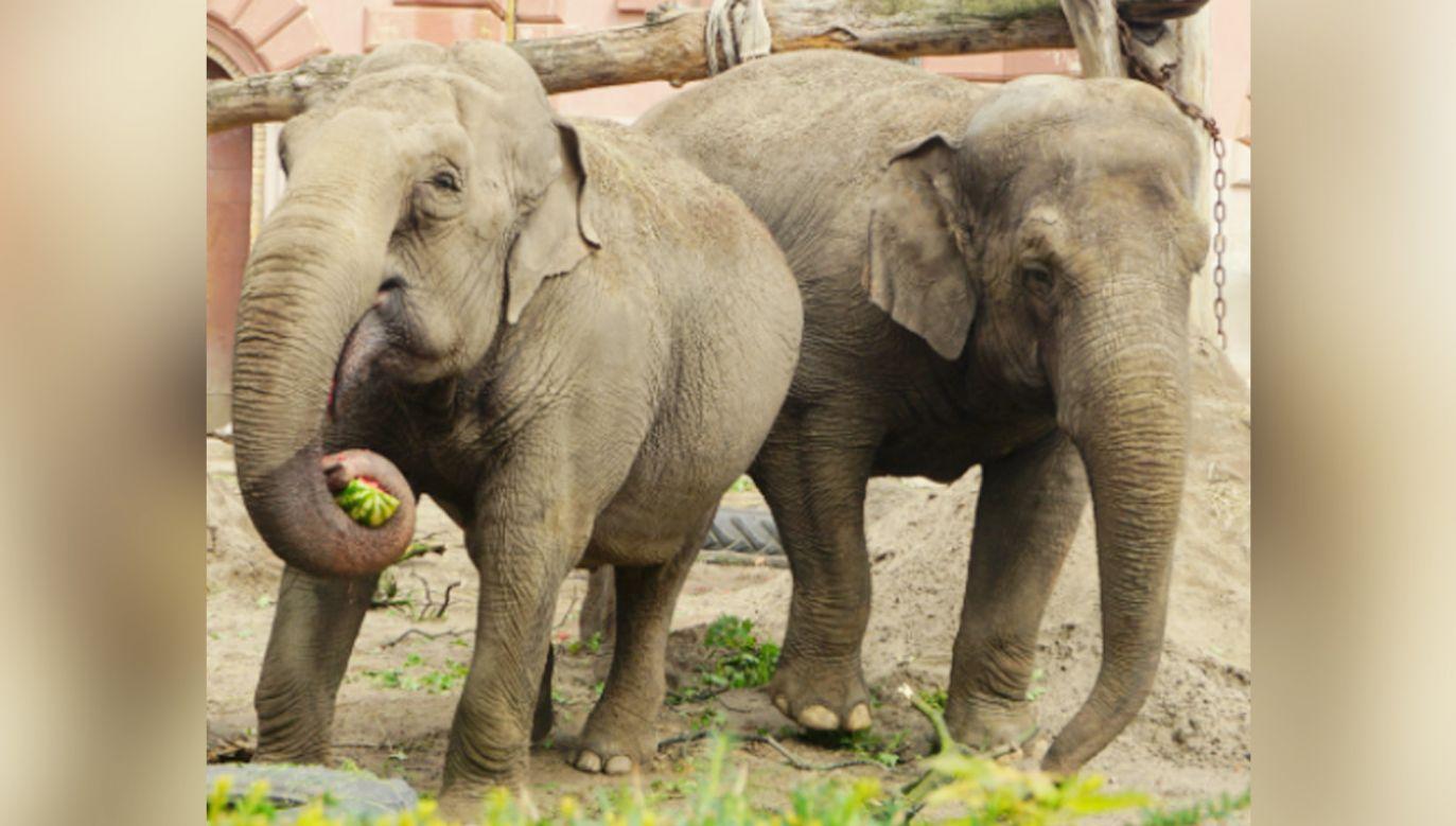 Birma i Toto z wrocławskiego zoo (fot. ZOO Wrocław)