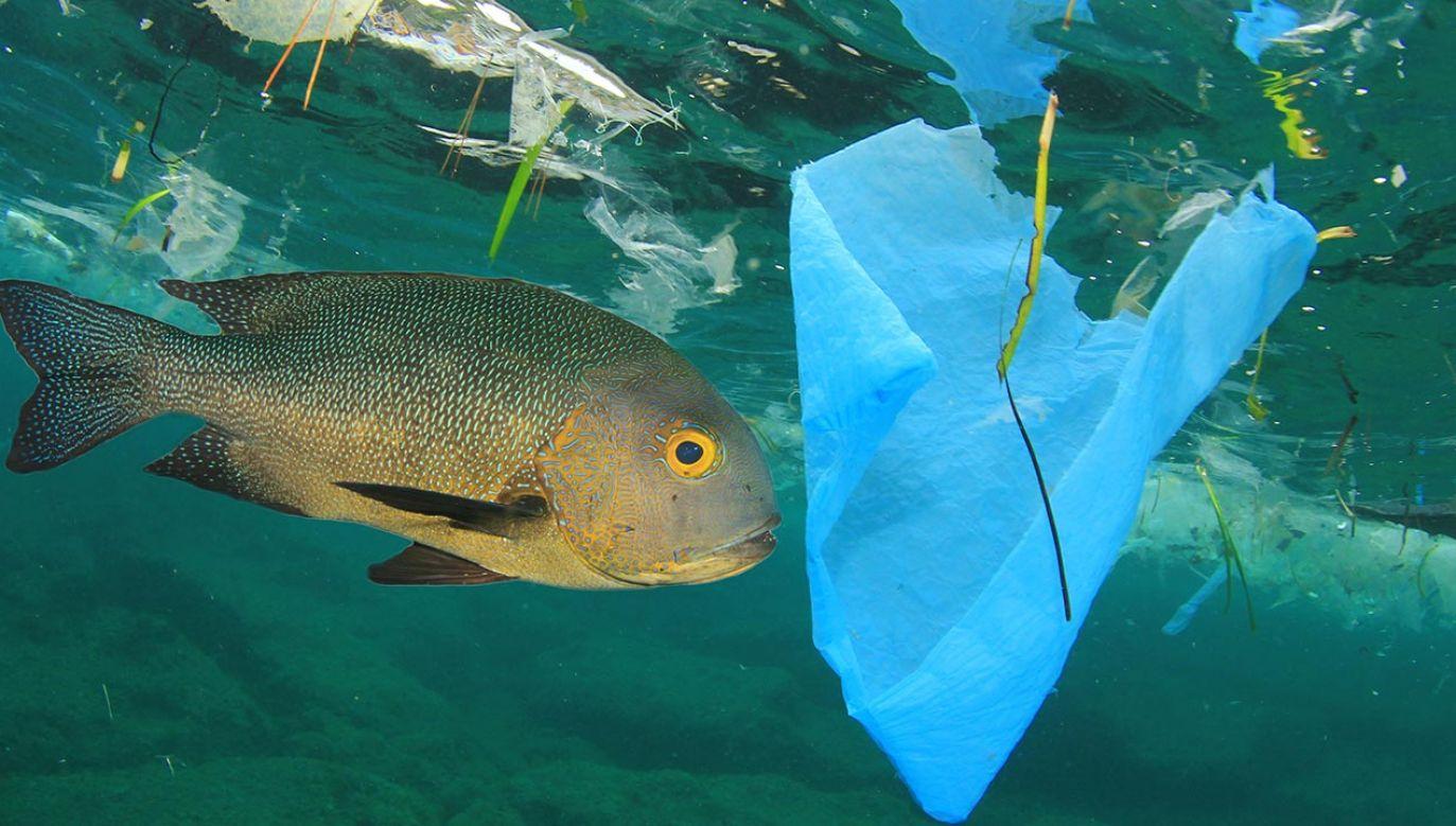 Badania wykazały, że mikroplastik często pochodzi z tkanin (fot. Shutterstock/Rich Carey)