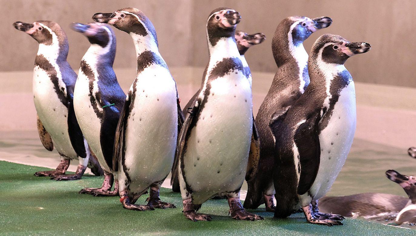 Budowa pawilonu dla pingwinów zaczęła się w listopadzie (fot. PAP/Andrzej Grygiel)