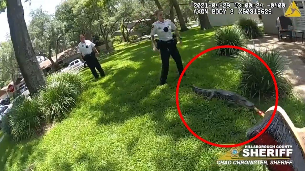 Aligator przed domem na Florydzie (fot. Hillsborough County Sheriff's Office