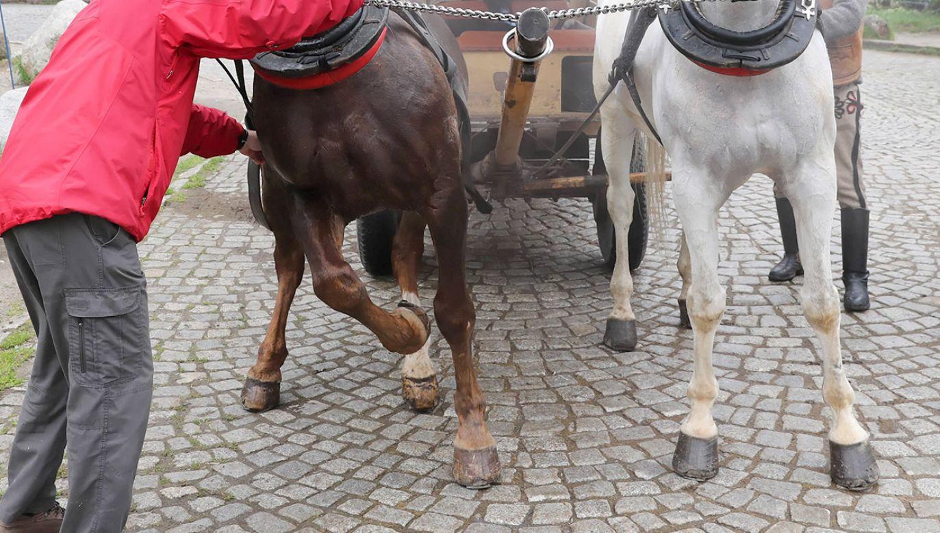 Do wypadku doszło w momencie, kiedy dziecko wsiadało na grzbiet konia, który wozi turystów (fot. arch.PAP/Grzegorz Momot, zdjęcie ilustracyjne)