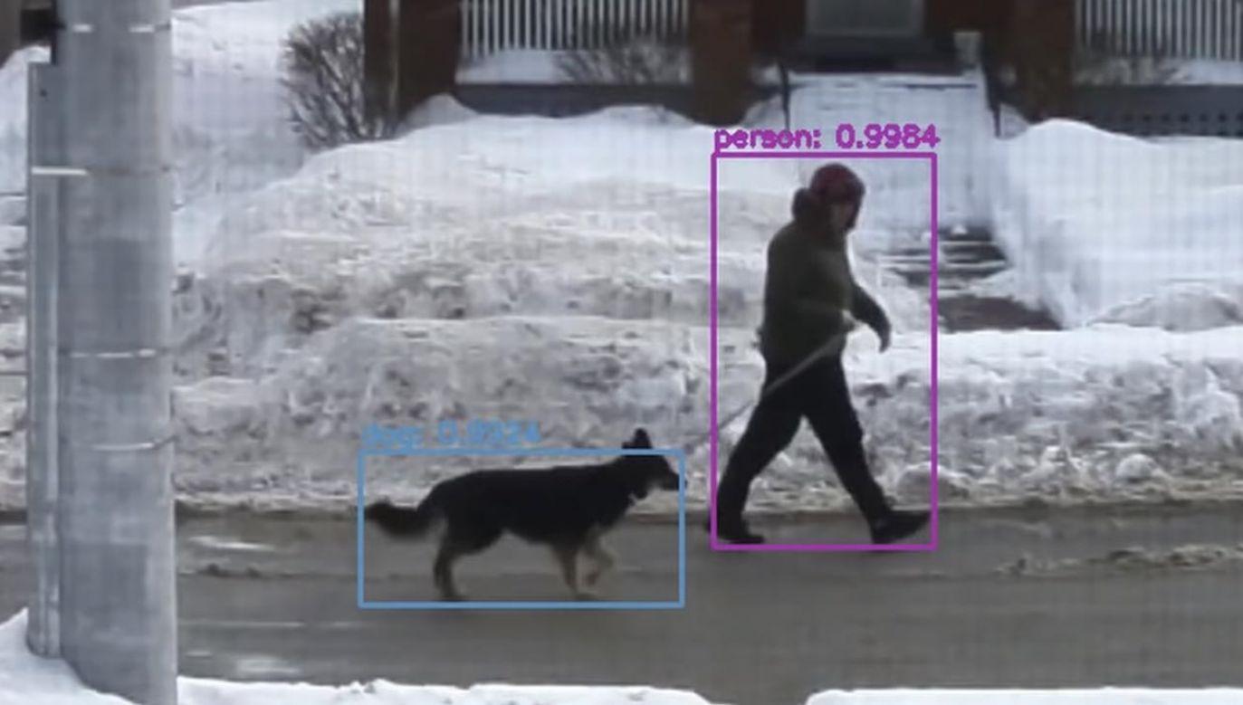 Patrzenie na psy i koty poprawia nastrój (fot. Youtube/ Ryder Calm Down)