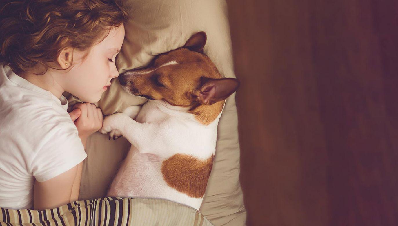 Spanie z pupilem w łóżku (fot. Shutterstock/Yuliya Evstratenko)