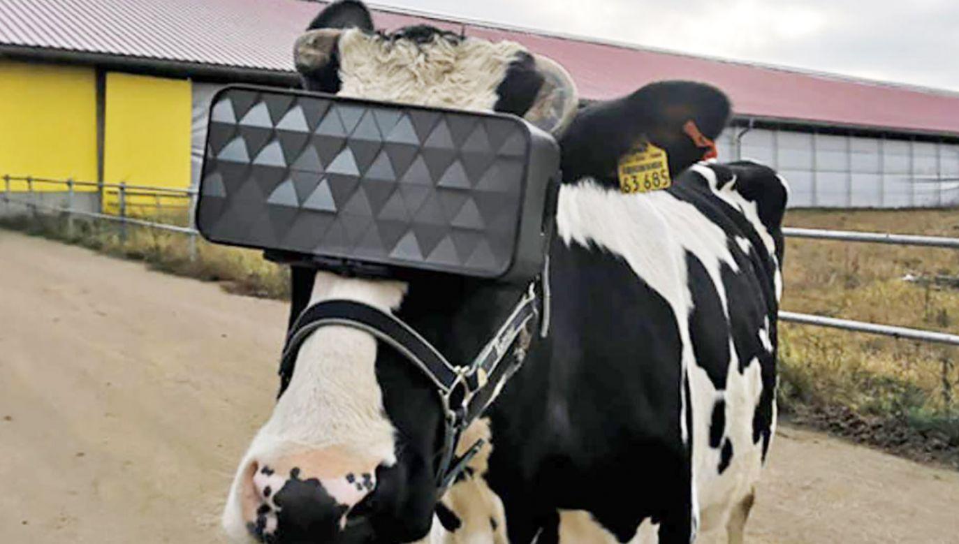 Okulary zaprojektowali weterynarze we współpracy ze specjalistami IT (fot. The Ministry of Agriculture (Minselkhoz)