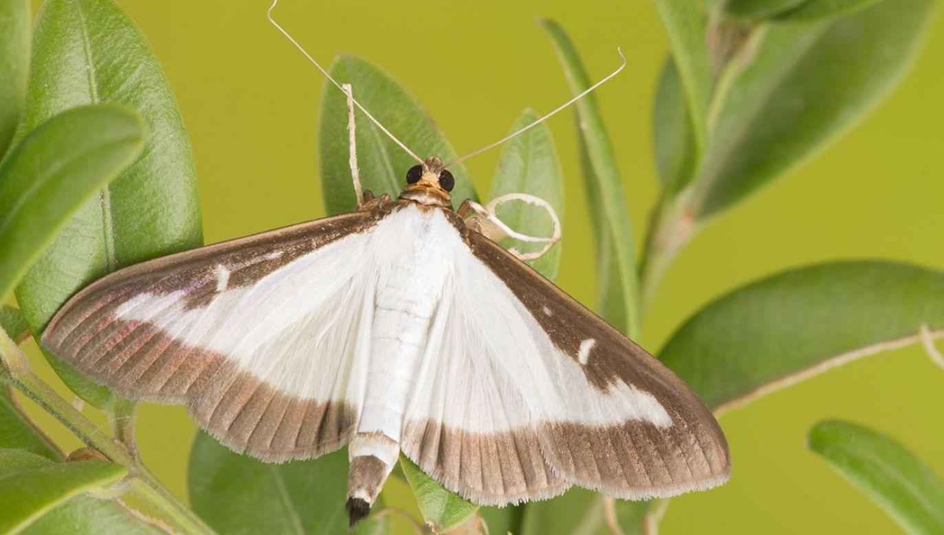 Na owady skarżą się głównie mieszkańcy stolicy i Kielc (fot. Shutterstock/Cosmin Manci)