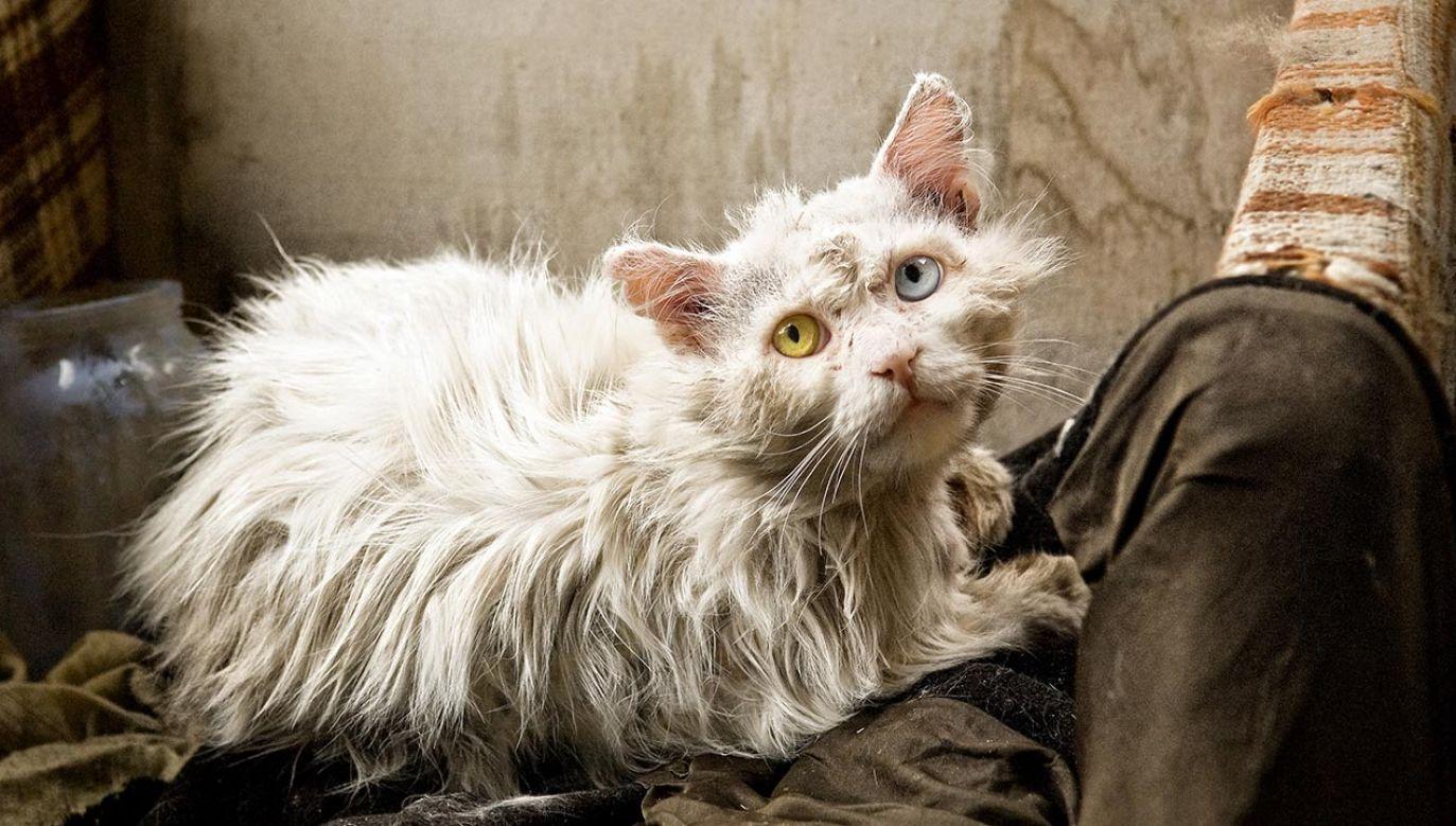 Młodzi mężczyźni podpalali budki dla bezpańskich kotów (fot. Shutterstock/Alisa24, zdjęcie ilustracyjne)