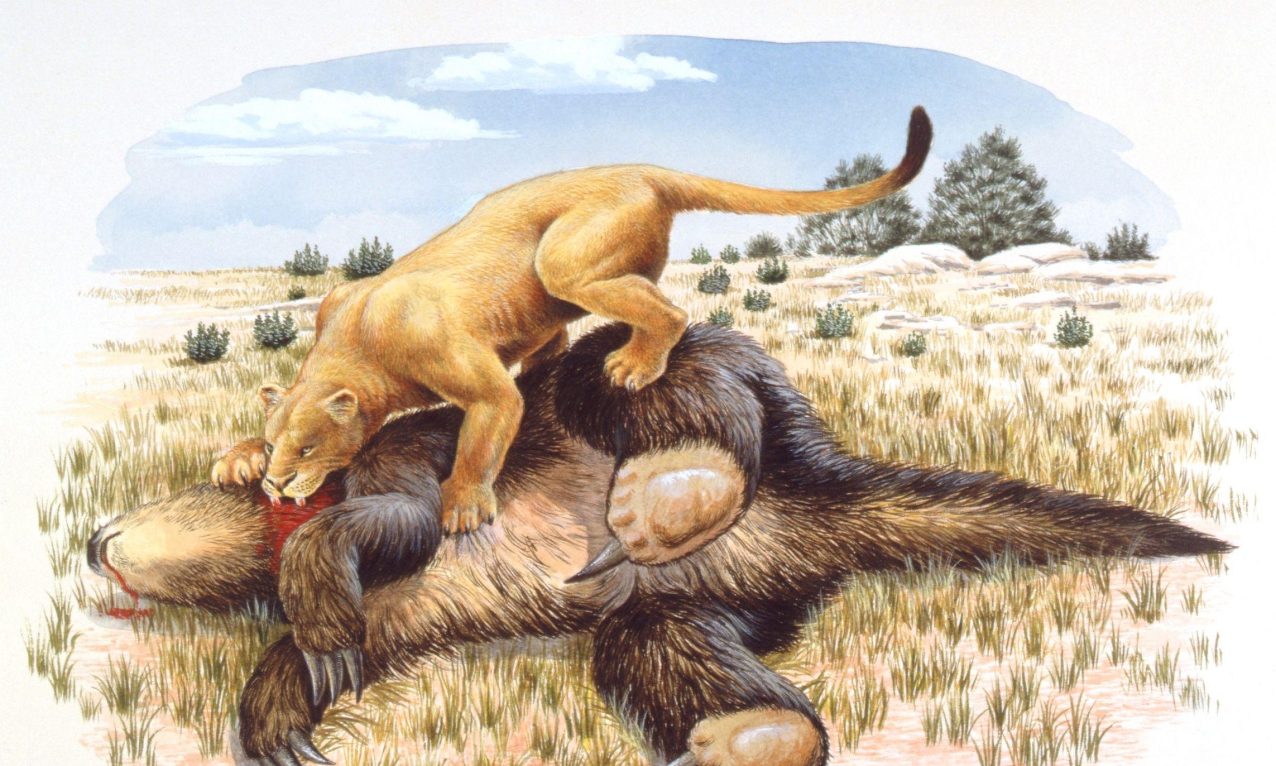 Ilustracja przedstawiające tygrysa szablo zębnego żywiącego się martwym leniwcem olbrzymim. Choć mogło też bywać odwrotnie – leniwiec nie gardził mięsem i był tak duży, że mógł powalić tygrysa. Fot. De Agostini via Getty Images