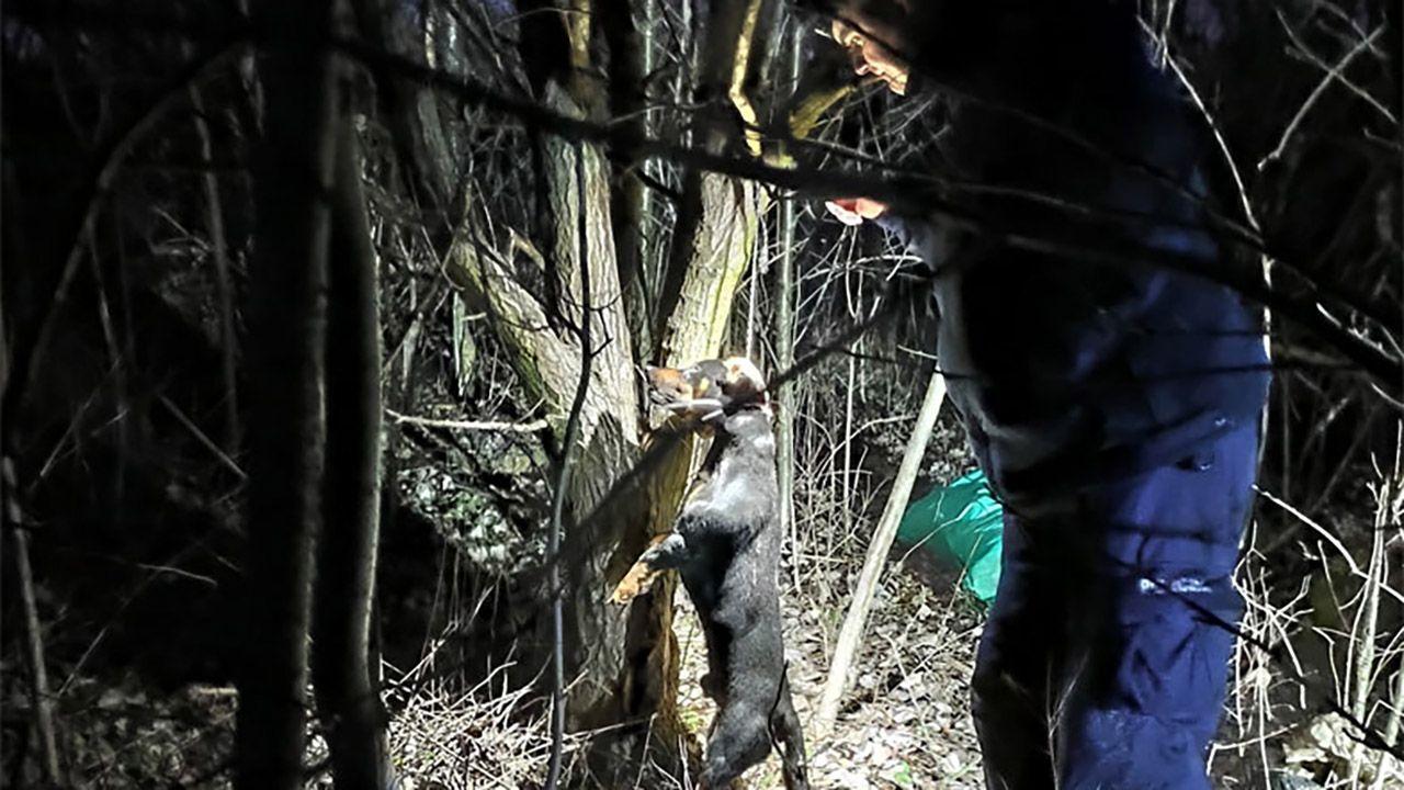 Policja szuka sprawcy tego bestialskiego czynu (fot. Fundacja Na Rzecz Ochrony Praw Zwierząt EX LEGE)