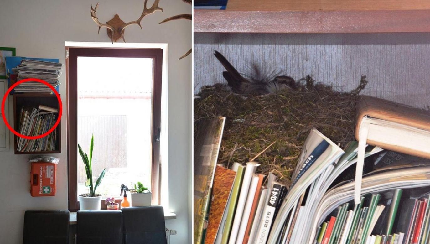 Kopciuszki z natury żyją blisko ludzi (fot. Facebook/Nadleśnictwo Garwolin, Lasy Państwowe)