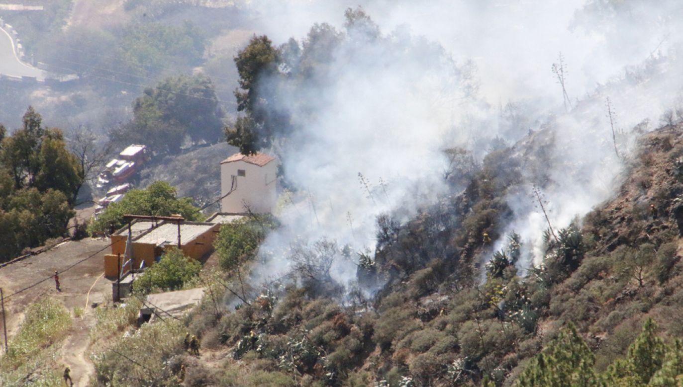 Pożary lasów dotykają Gran Canarię od kilku tygodni (fot. Europa Press News/Europa Press via Getty Images)