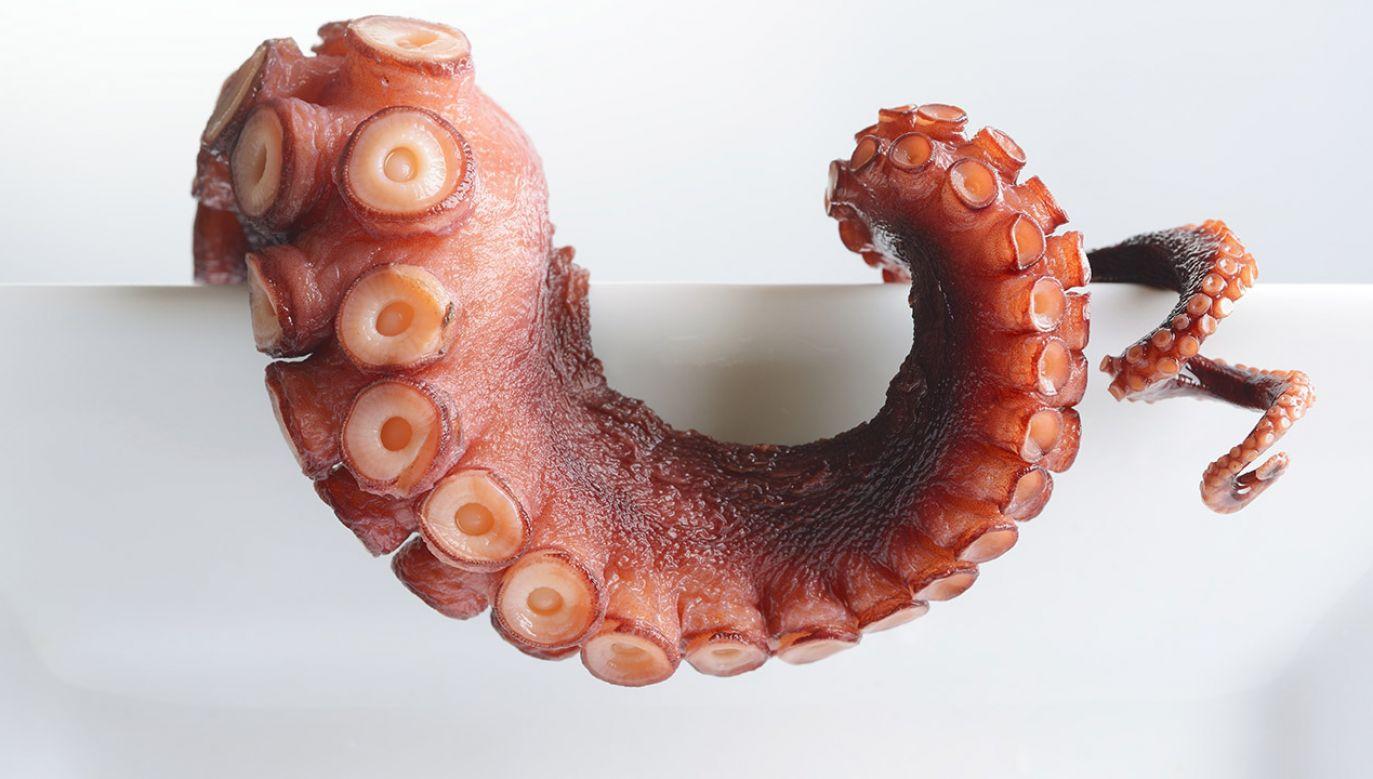 Ewolucja bywa dowcipna i lubi czasem odkrywać na nowo i w zupełnie innej odsłonie te same genetyczne elementy (fot. Shutterstock/pick)