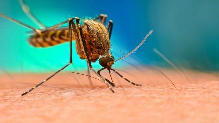Miasto stosuje przeciw komarom środki chemiczne (fot. Shutterstock/Digital Images Studio)