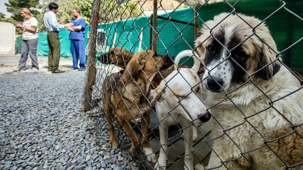 Ze schroniska ewakuowano 94 psy i 79 kotów (fot. NurPhoto/Getty Images, zdjęcie ilustracyjne)