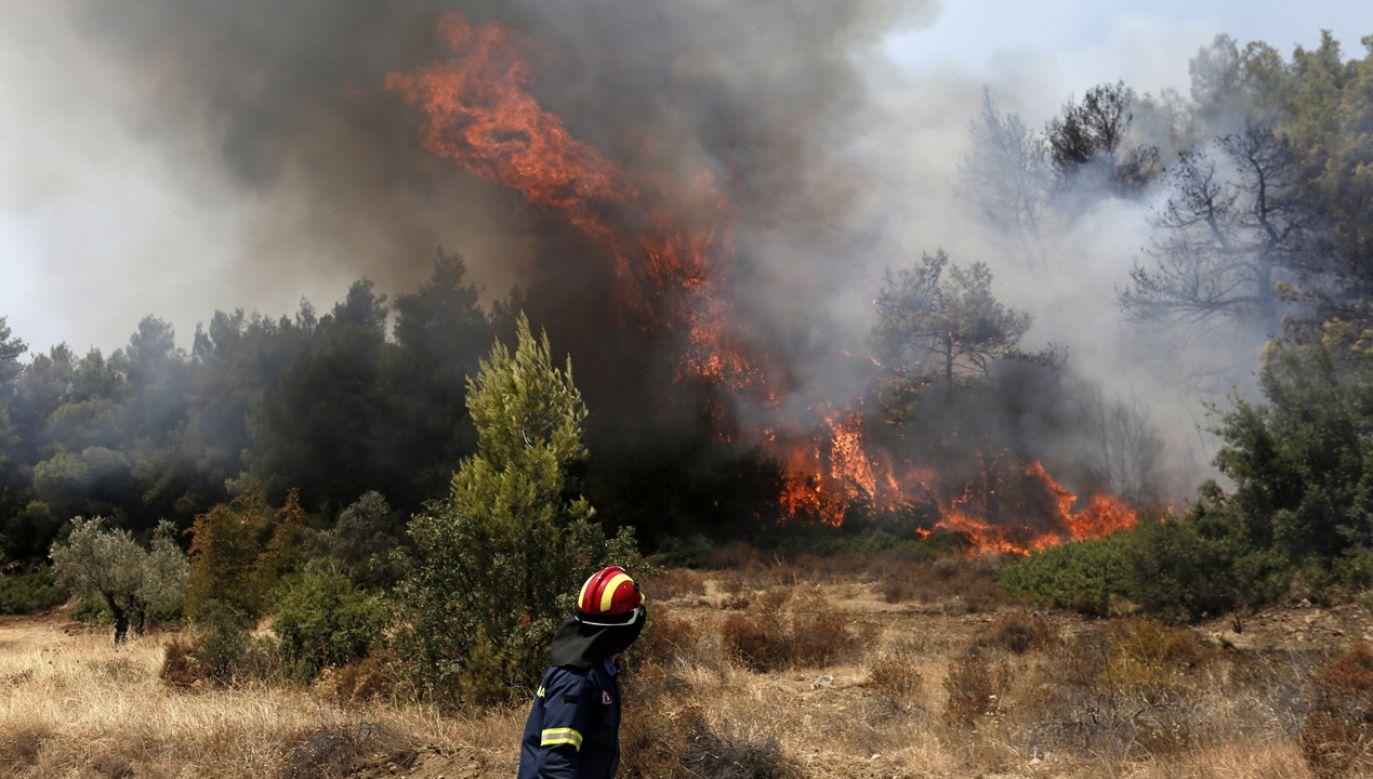 W całej Grecji w ciągu doby wybuchło ponad 50 pożarów (fot. PAP/EPA/KOSTAS TSIRONIS)