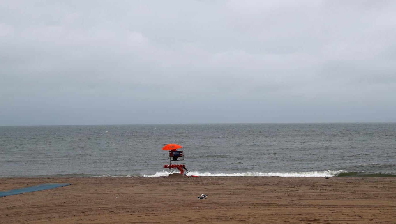 Policja poinformowała, że mózg znaleziony na plaży nie należał do człowieka (fot. REUTERS/Shannon Stapleton, zdjęcie ilustracyjne)