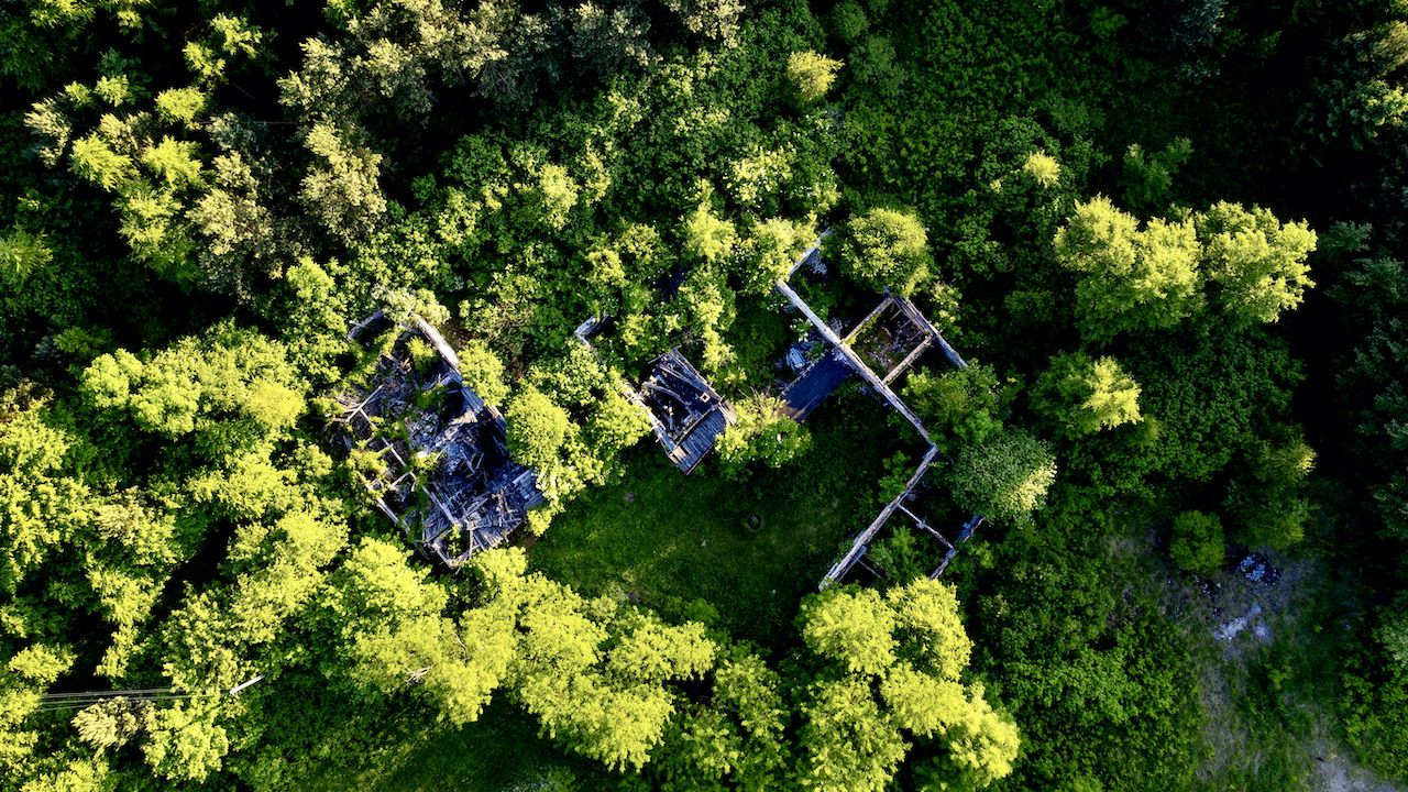 Organizacje branżowe postulują wprowadzenie zakazu eksportu drewna okrągłego (fot. arch.PAP/Ł.Gągulski)