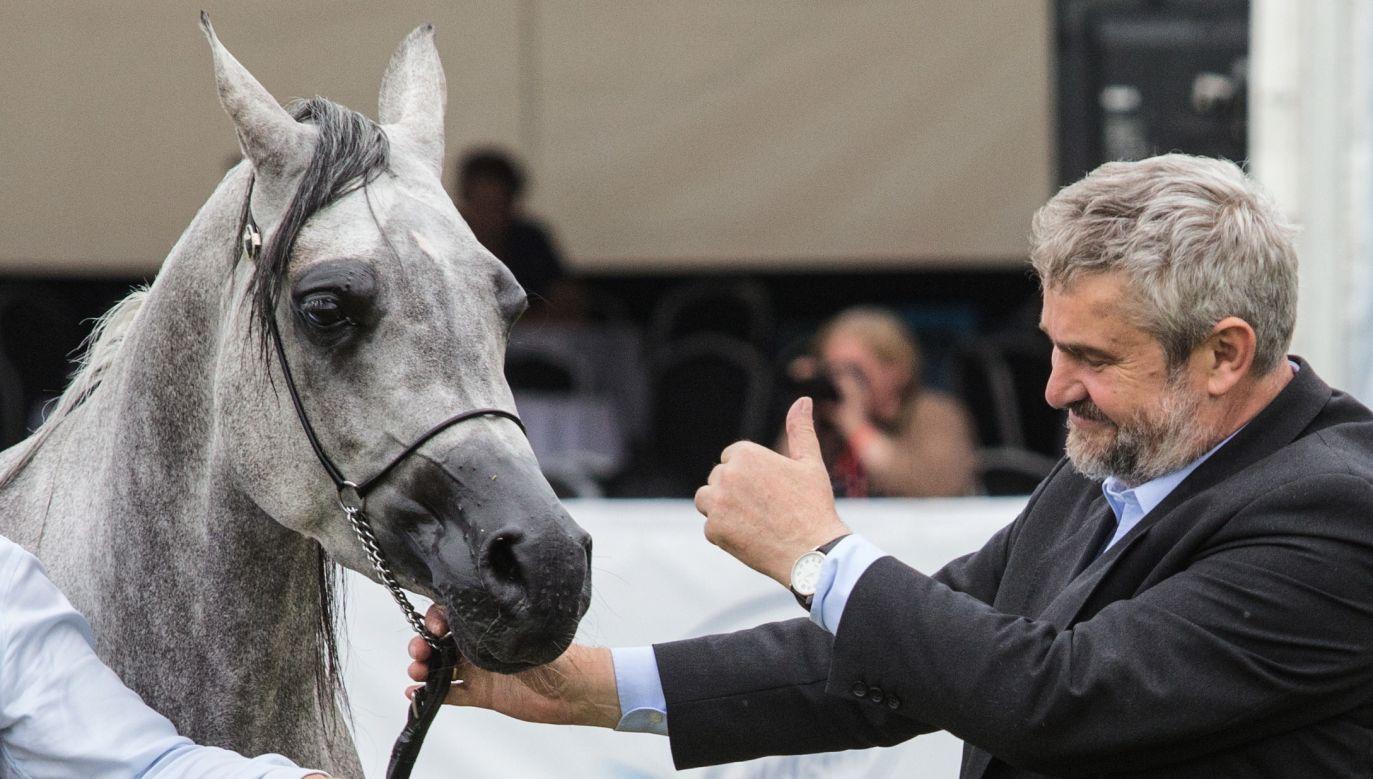 Po południu w stadninie w Janowie Podlaskim rozpocznie się aukcja koni arabskich Pride of Poland (PAP/Wojtek Jargiło)