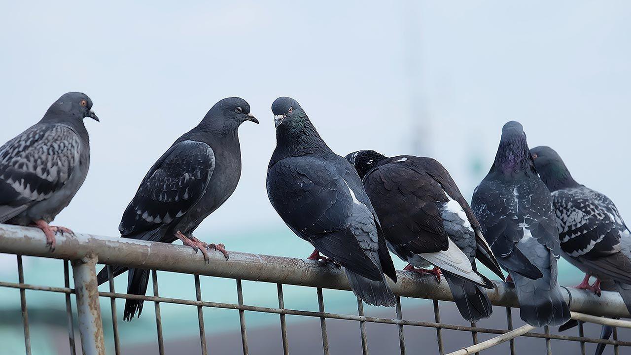 Martwe ptaki, wirus atakuje – co należy zrobić? (fot. Shutterstock/ Mostlysunny)