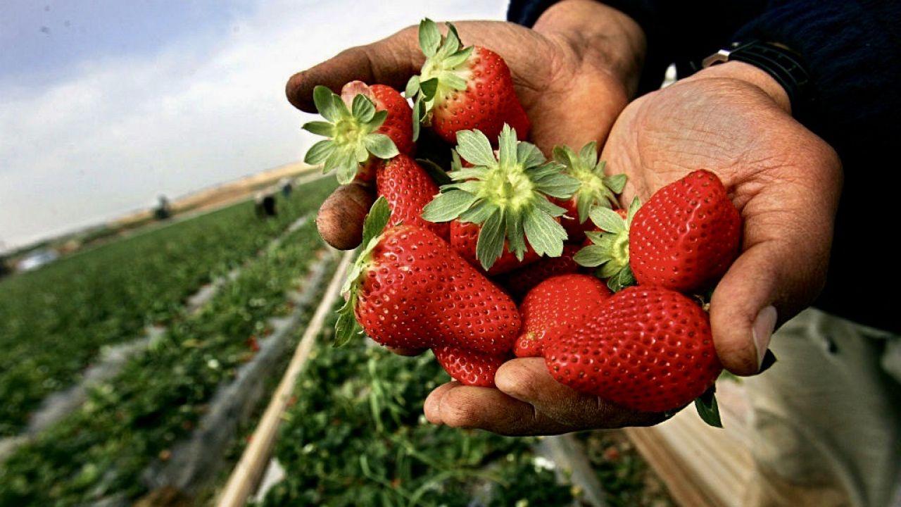 """Dane pochodzą z """"Narodowych badań konsumpcji warzyw i owoców"""" (fot. Abid Katib/Getty Images)"""