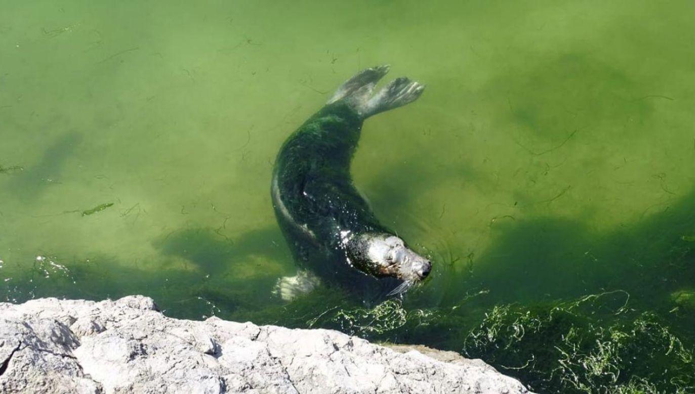 Mimo złych warunków władze miejskie bronią zoo (fot. Facebook/AnimaNaturalis España)