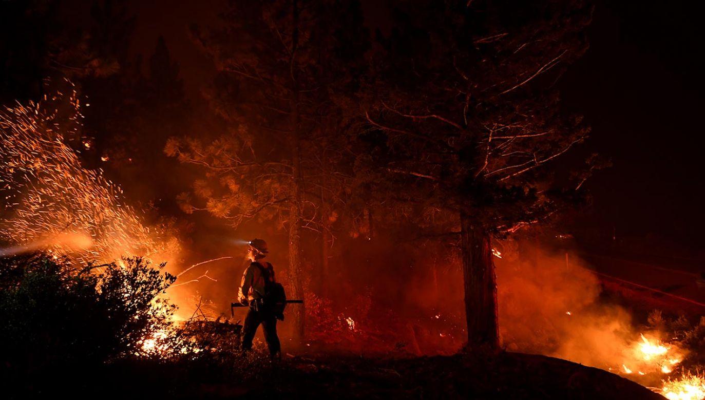 Strażacy w Kalifornii walczą z pożarem (fot. Wally Skalij/Los Angeles Times via Getty Images)