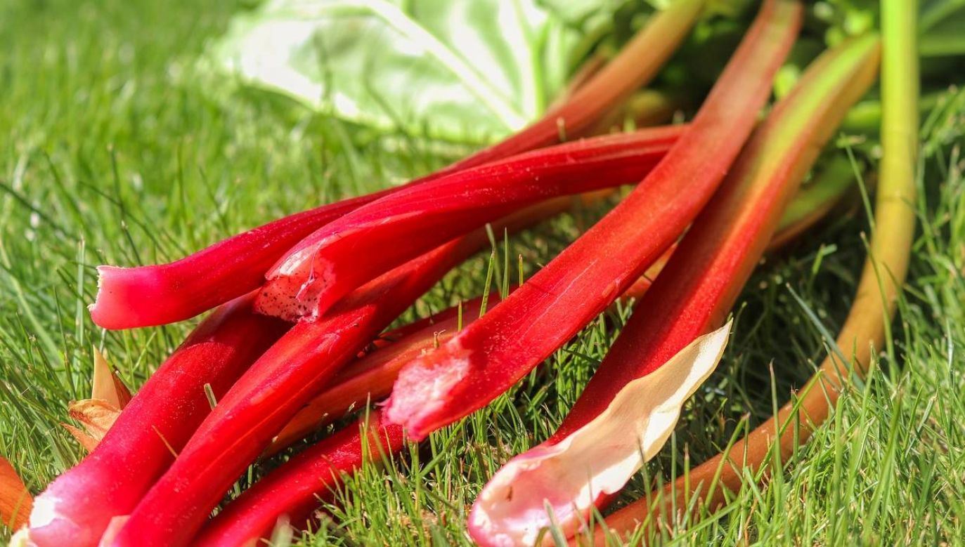 W Polsce rabarbar jest warzywem, ale już w USA owocem (fot.Pexels)